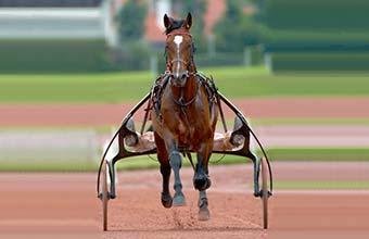 Acheter une part d'un cheval de course