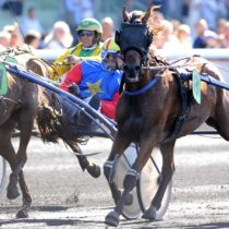 Become owner or co-owner of a racehorse